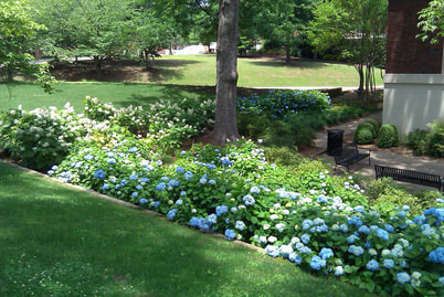 Knoxville Landscaping Company Flowers